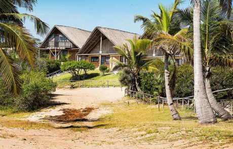 Palm trees with Guinjane Lodge Chalets in the background - Beach Resorts Mozambique - Guinjane Lodge
